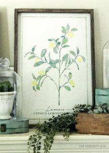 botanical lemon framed sign 18x26